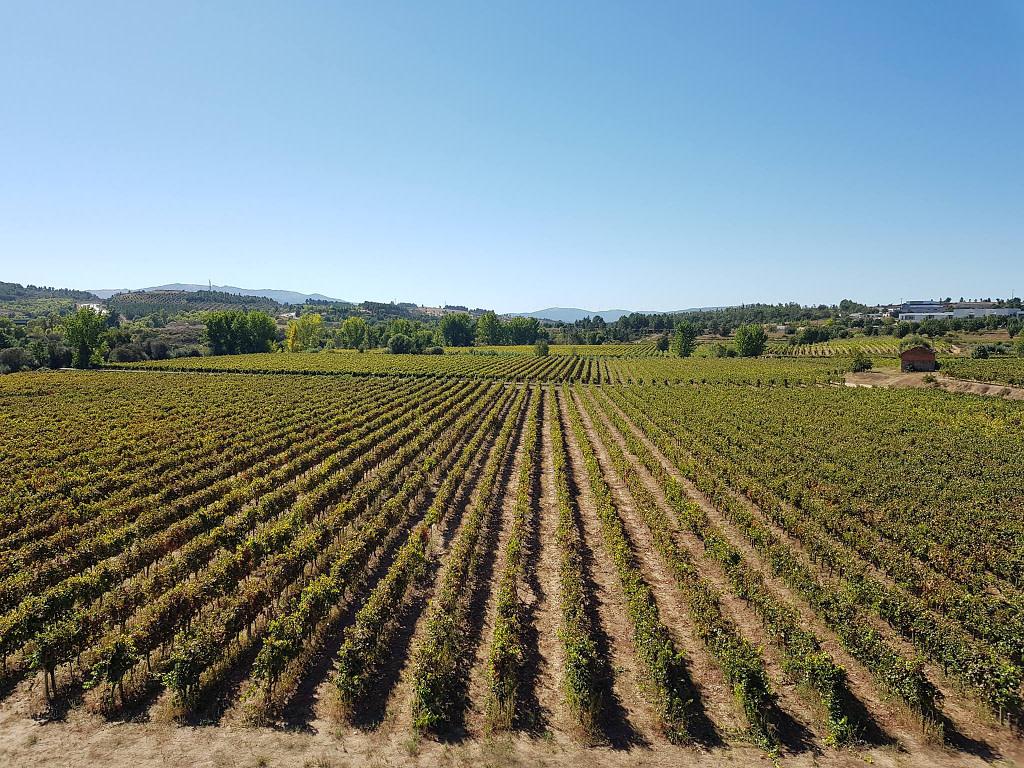 Guide des vins portugais avec le vignoble d'Almeida Garrett dans la Beira Interior