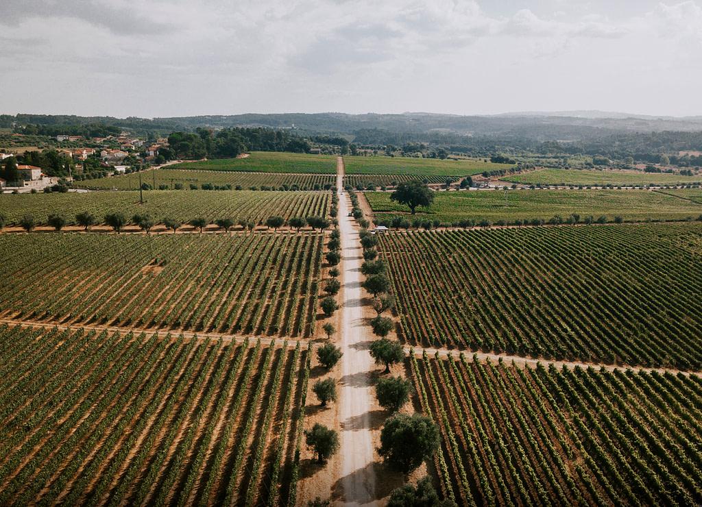Guide des vins portugais de la région viticole du Dão