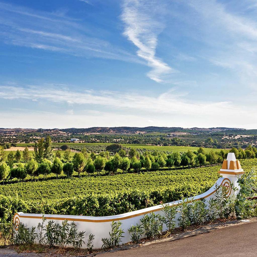 Grand vignoble d'Alentejo et l'un des meilleurs vins portugais : Monte dos Perdigoes