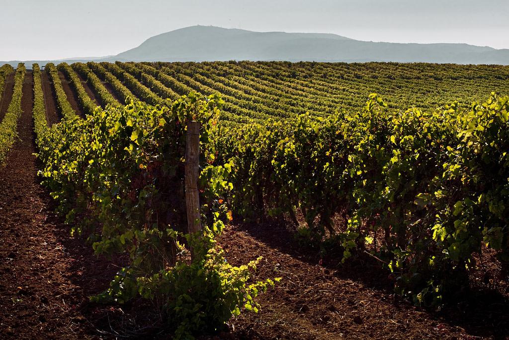 Guide des vins portugais avec Quinta da Lapa, un vin du Tejo