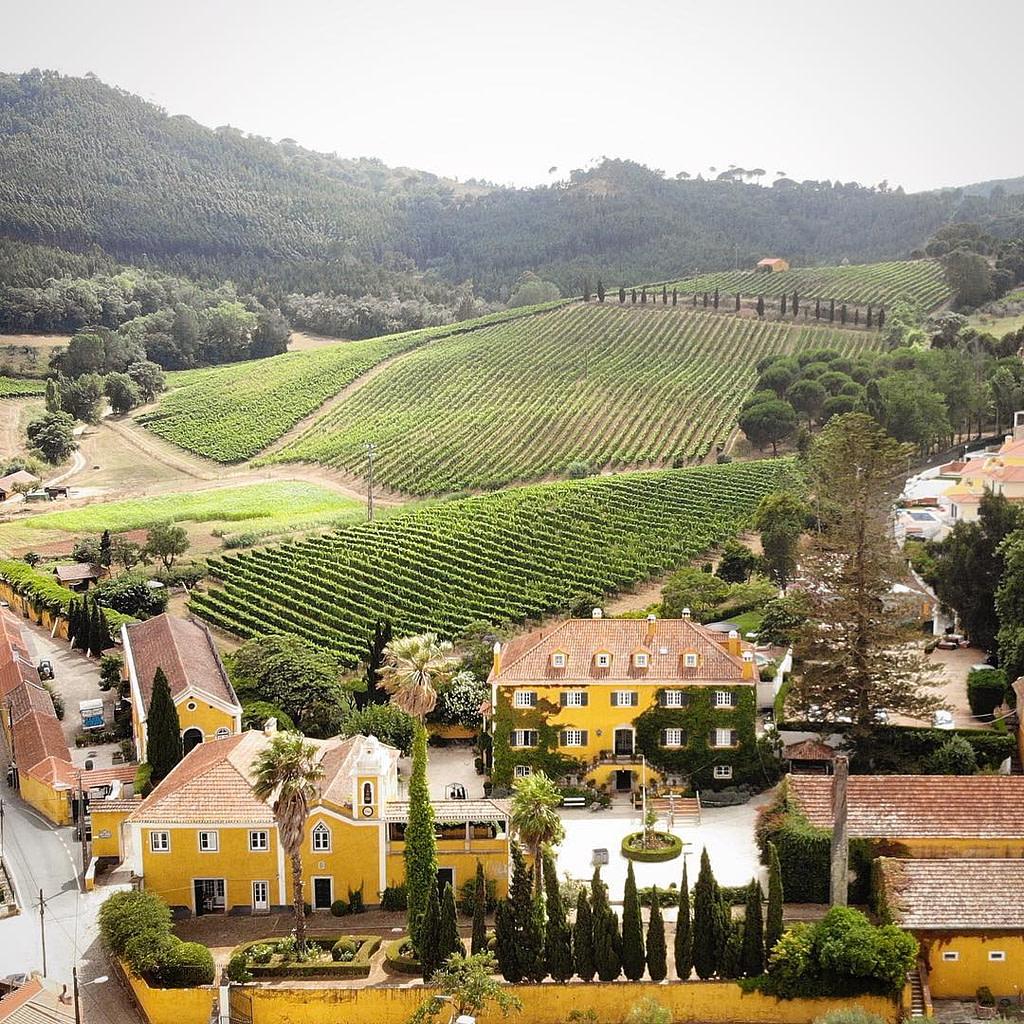 Guide des vins portugais avec le vignoble Quinta de Sant'Ana dans la région de Lisbonne