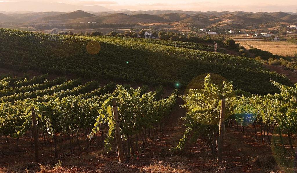 Vignoble de l'Algarve, région viticole qui fait partie de notre guide des vins portugais