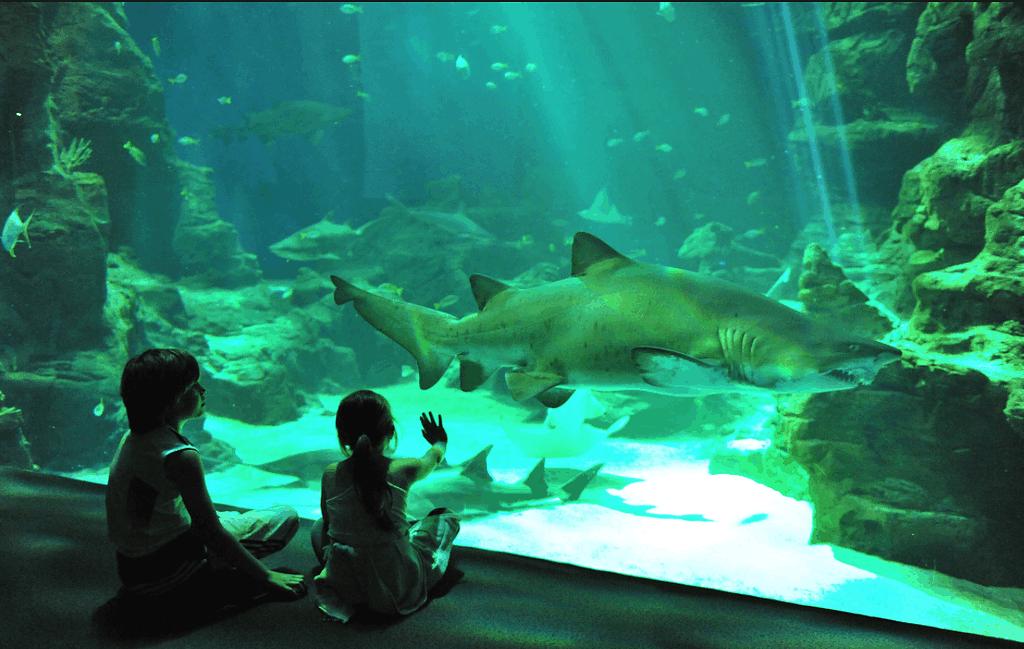 Aquarium Lisbonne en famille