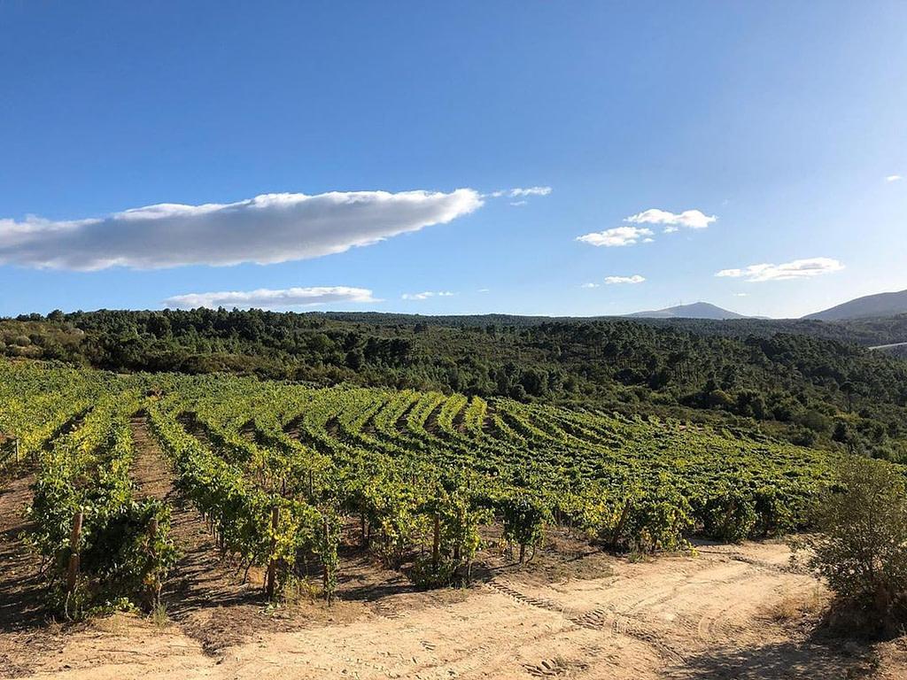 Région viticole Tras-Os-Montes, vignoble Head Rock