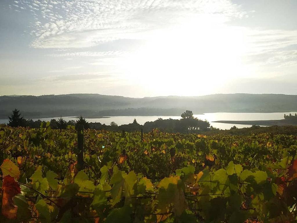 Guides des vins du Portugal avec la région viticole Tavora et Varosa