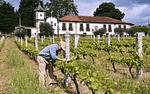 Dégustation d'un vin de Tras-Os-Montes : Palmeirim De Inglaterra
