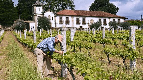 Les vins de tras-Os-Montes au Portugal à travers les vins de Palmeirim d'Inglaterra