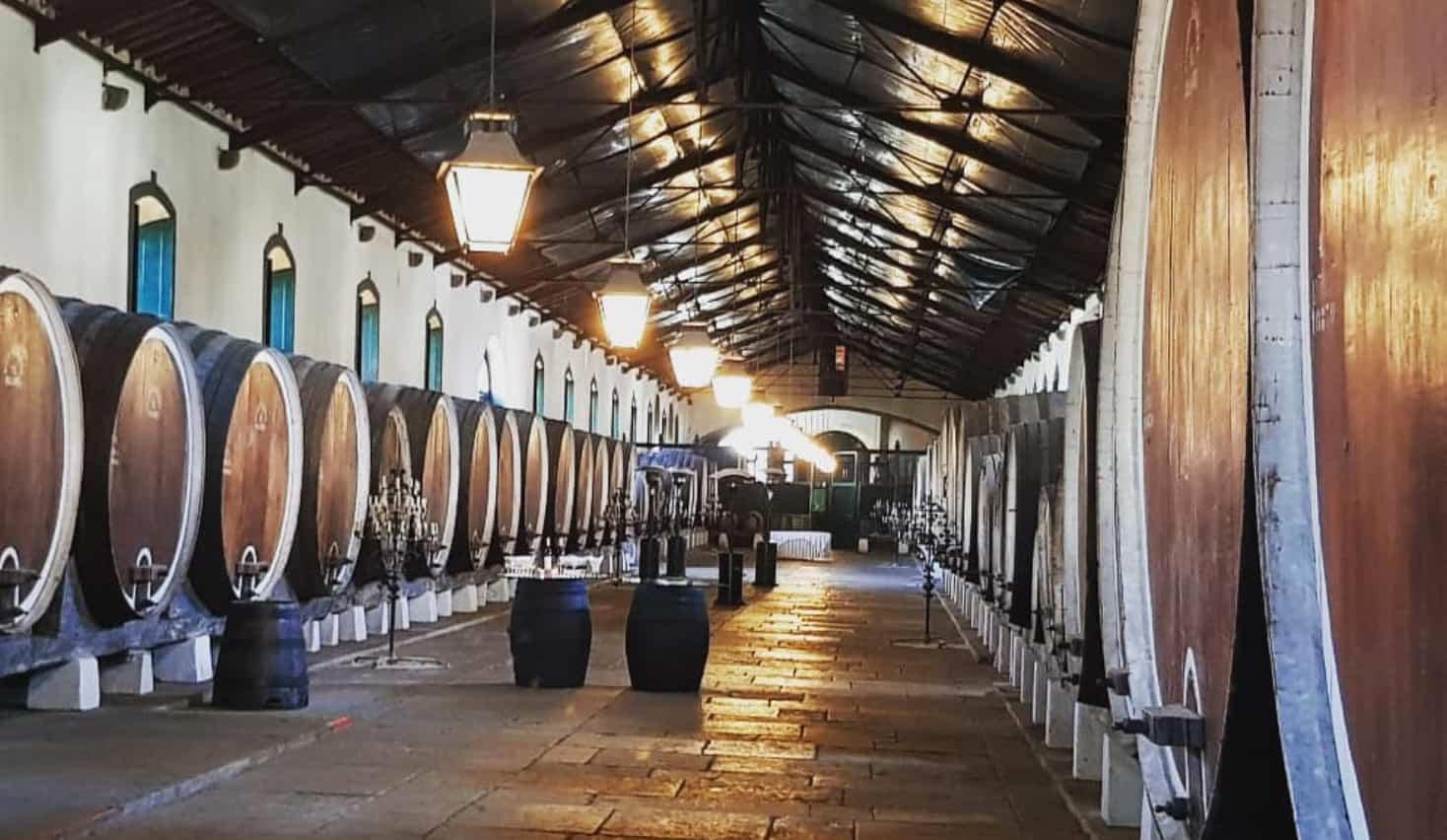 Tour des vignobles de Lisbonne.
