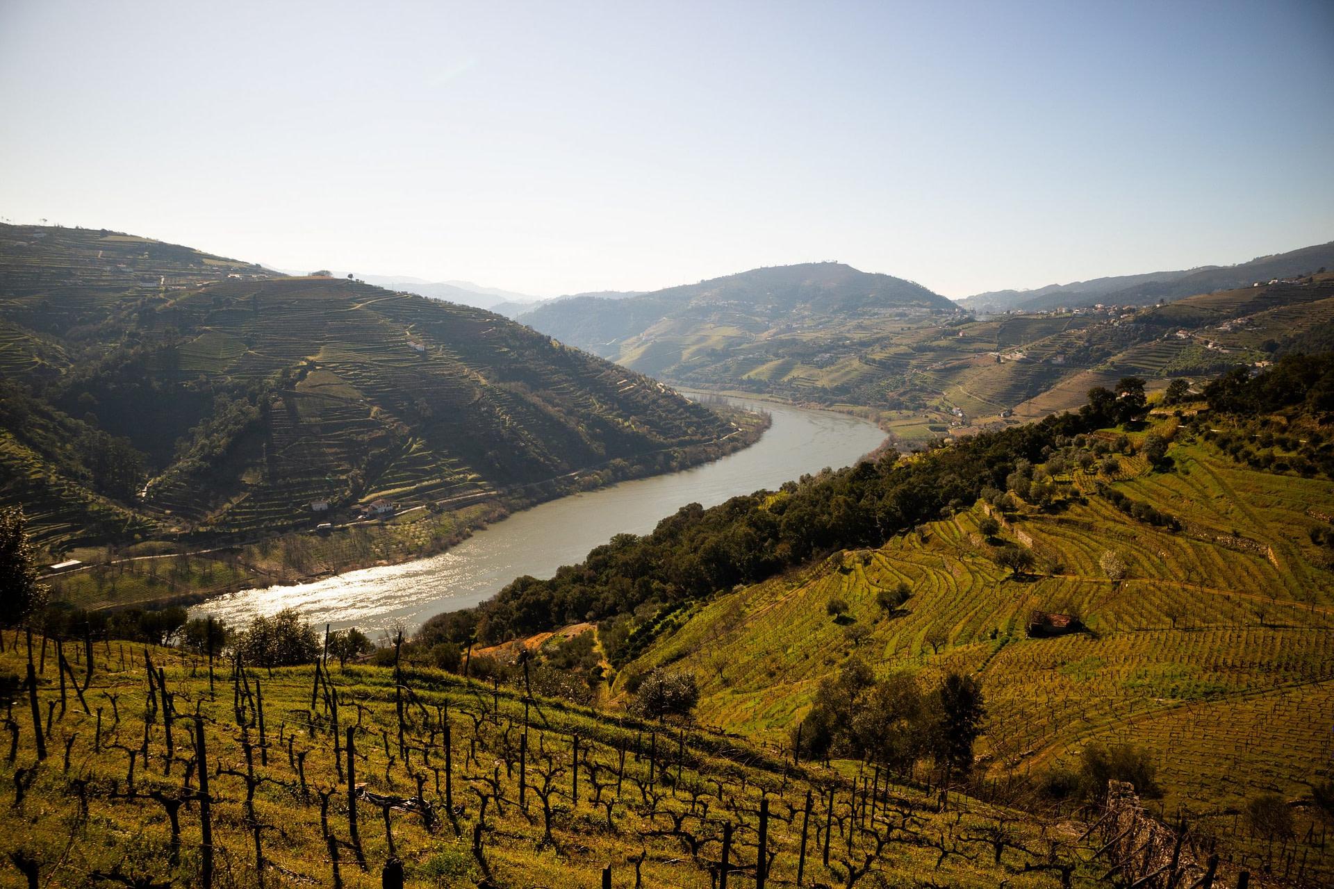 Guide des vins portugais
