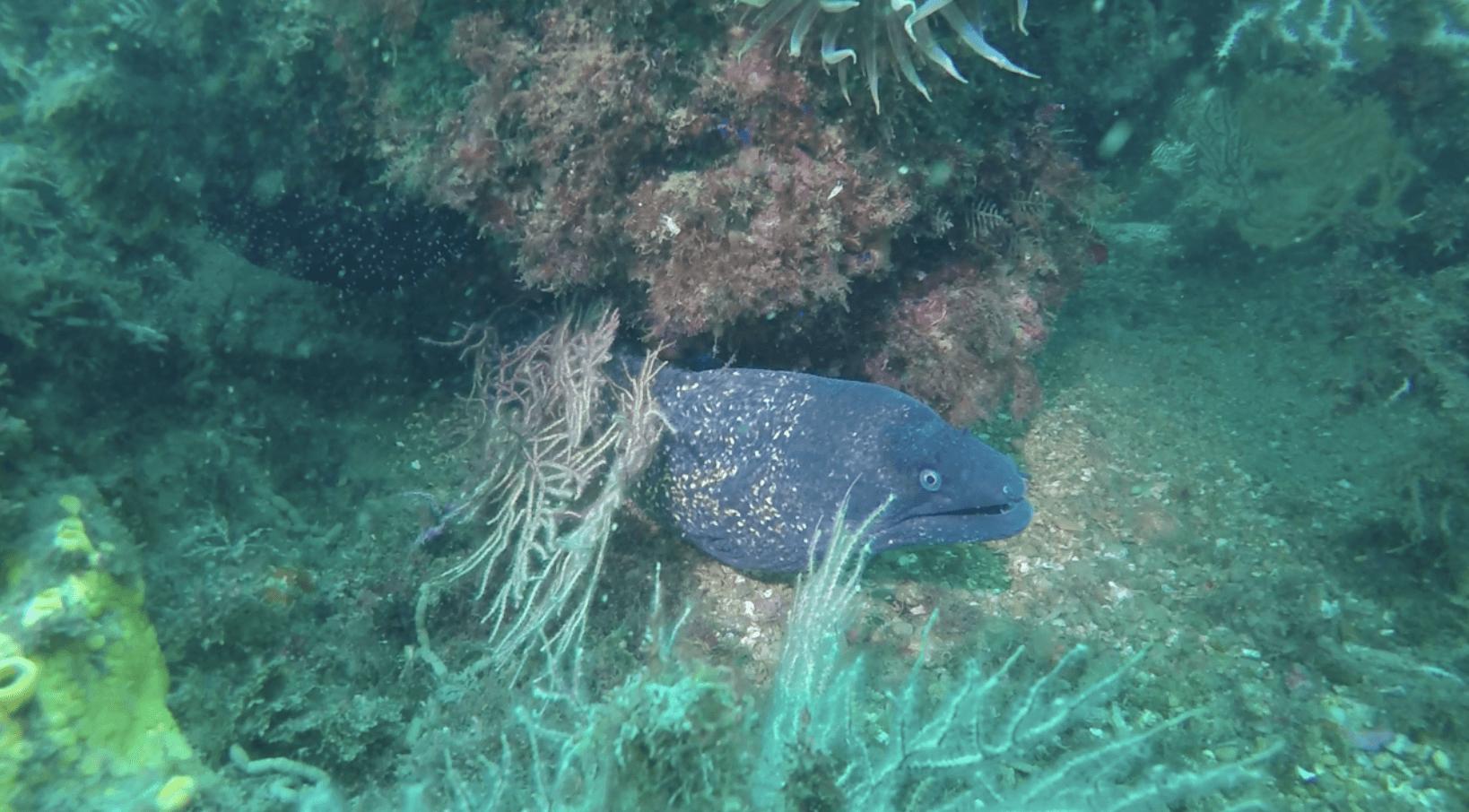 Excursion plongée sous-marine pour plongeurs certifiés.